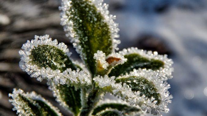 groente winter