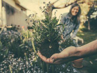 Een duurzame tuin?