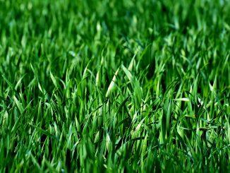Voordelen graszoden